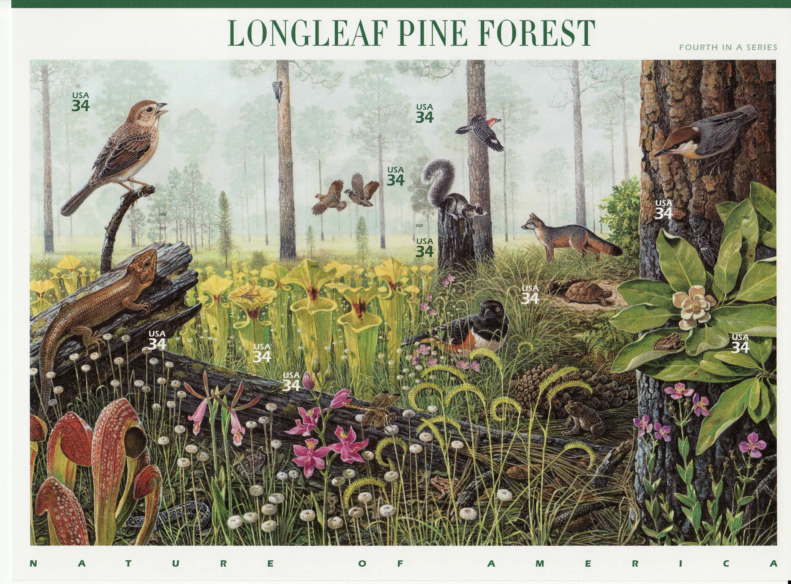 Longleaf Pine Forest stamp sheet